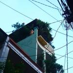 city-garden-Mysaigoncity_Instagram_10